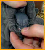 Nacer y Crecer de un Shar Pei
